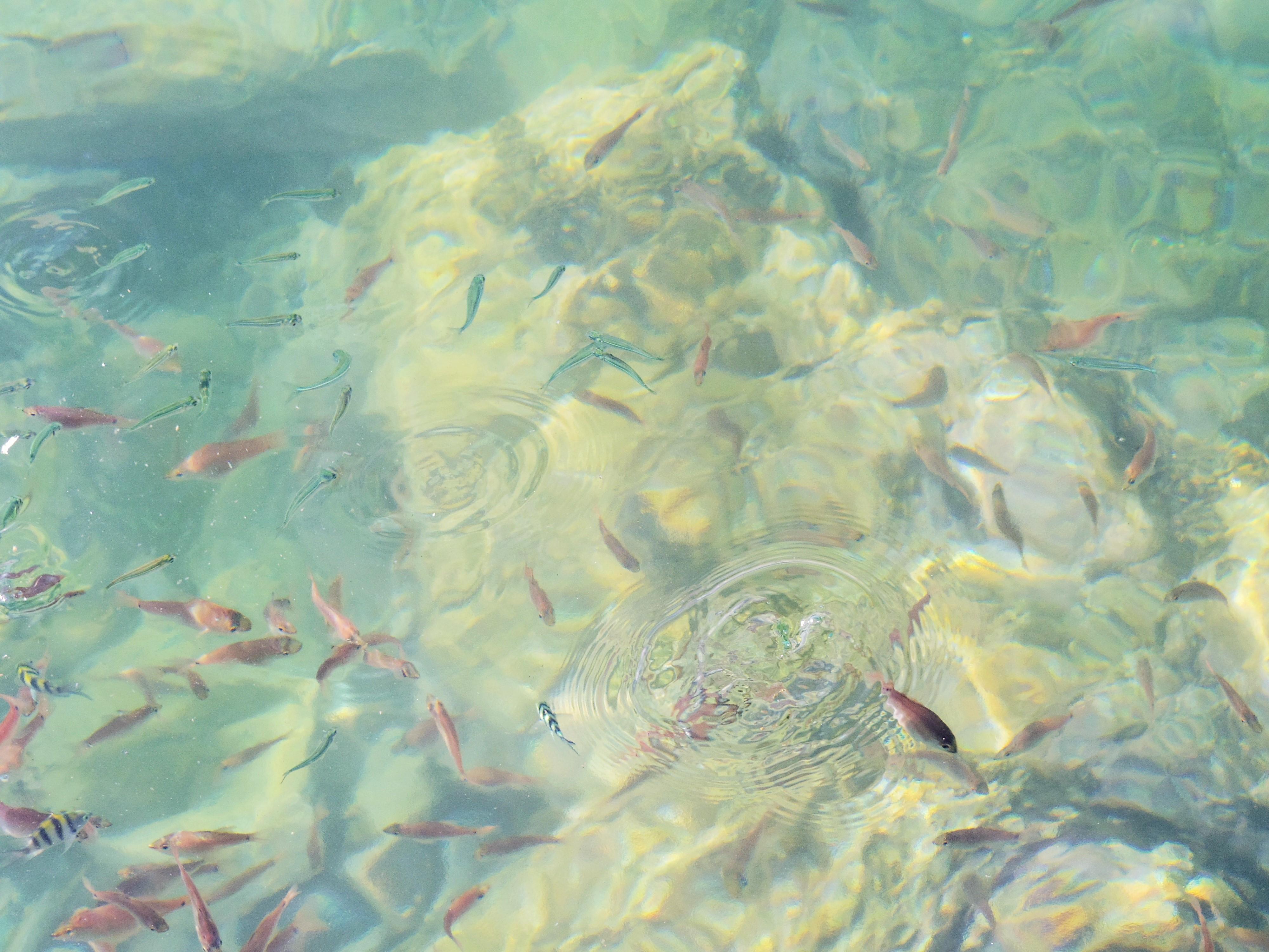 双名島 海 魚 中土佐町