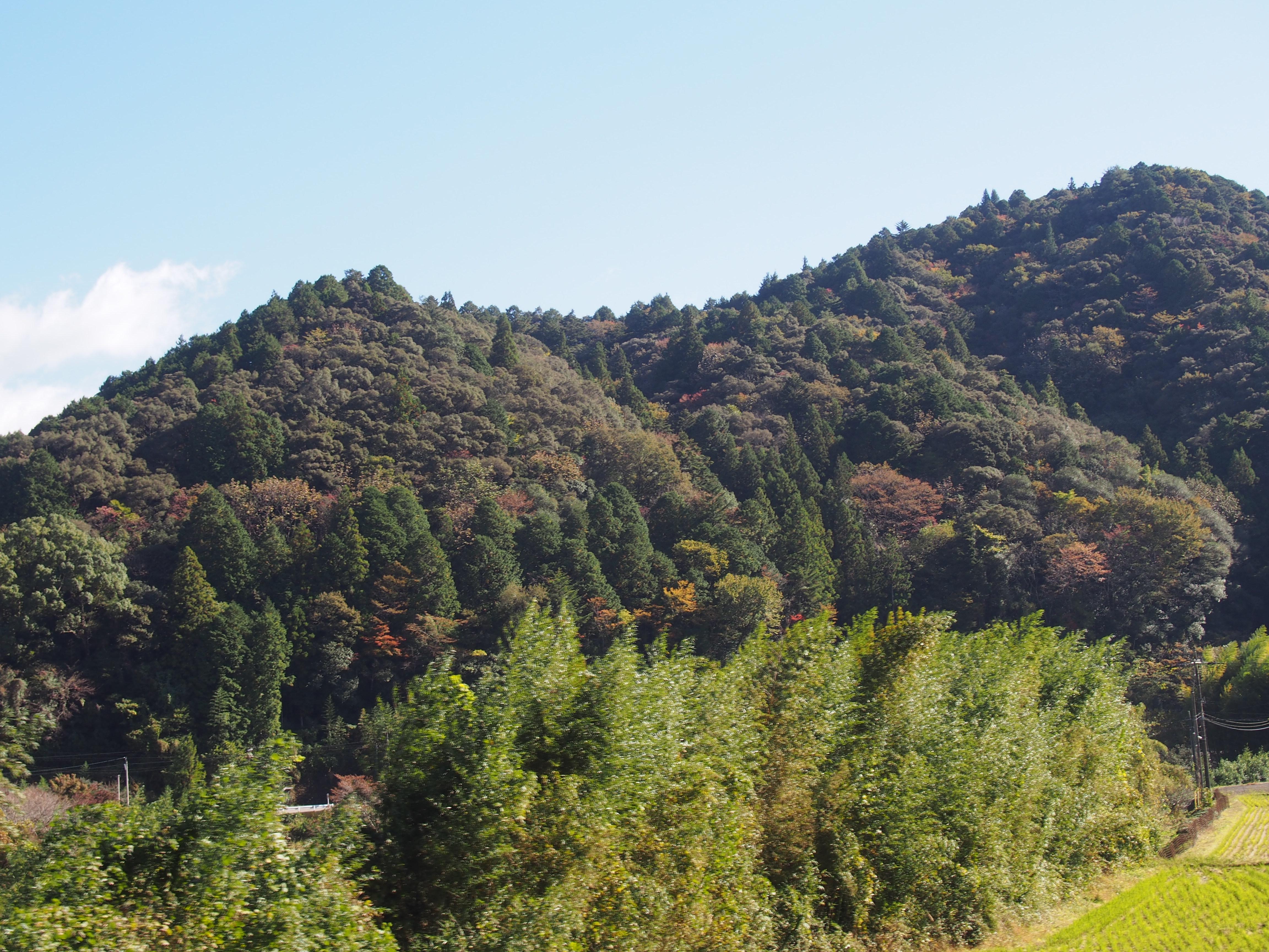 高知 中土佐町 島の川渓谷 紅葉