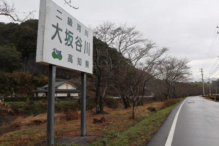 中土佐町 桜 大坂谷川