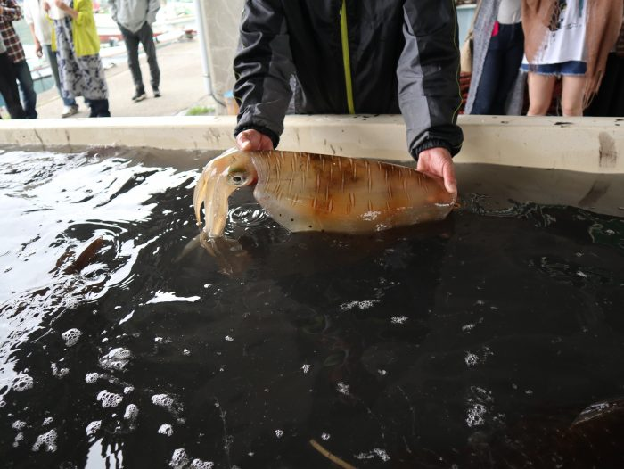 中土佐町 海鮮祭り 上ノ加江