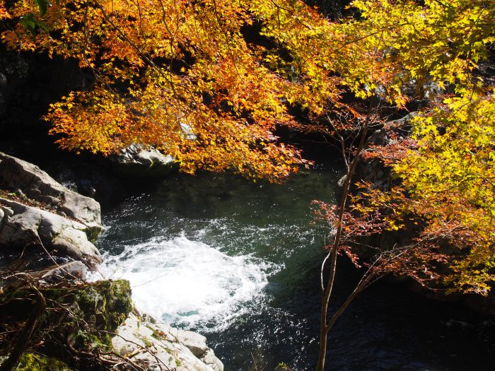 中土佐町 島ノ川渓谷 紅葉